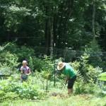 Crob Mob weeding