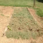 F garden mulched