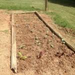 F garden planted
