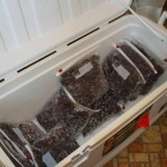 Grapes in cooler